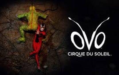 Circo visita el país con siete funciones