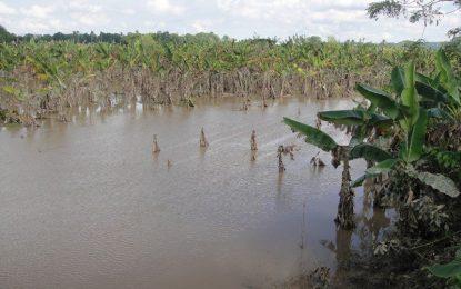 Inundaciones dejan pérdidas millonarias en R. Dominicana