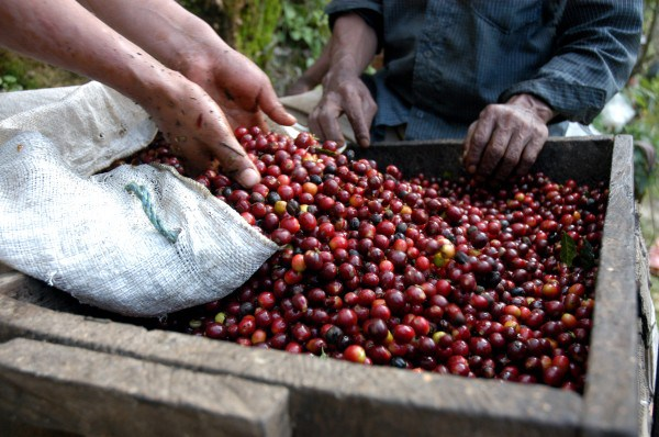 11 de abril de 2017 Día Nacional del café.
