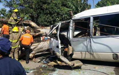 Dos menores mueren al caerle una mata a la guagua en la que se transportaban en San Cristobal