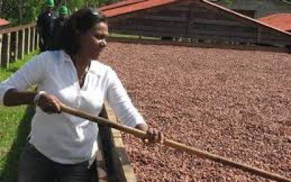Lanzan proyecto para la promoción del crecimiento económico asociado al Cacao en El Seibo.
