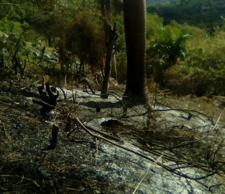 Ante sequía, siguen quemando árboles en El Seibo