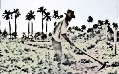 Defensoría del Pueblo exhorta investigar desalojo a campesinos