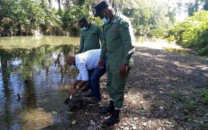 Director de Medio Ambiente y miembros del SENPA liberan jaibas en el Río Seibo