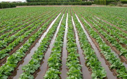 Iniciarán proyecto de viveros y hortalizas en El Seibo