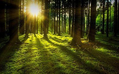 Medio Ambiente realizará operativos de reforestación